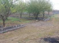 فروش باغ مسکونی 423 متر در بهنمیر در شیپور-عکس کوچک
