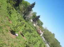 فروش 400 متر زمین باغ سلیم شیخ  در شیپور-عکس کوچک