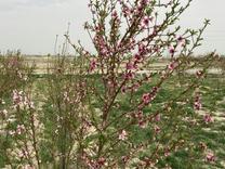 فروش زمین 400 متر در شهریار در شیپور