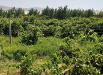 فروش باغ انگور و الوچه در شیپور-عکس کوچک