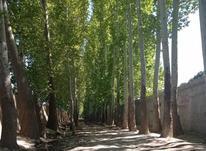 فروش زمین باغ 500 متر در شهریار در شیپور-عکس کوچک