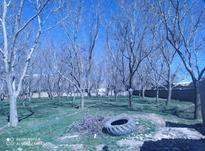 باغ گردو در روستای رود آور در شیپور-عکس کوچک