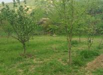 زمین  باغی  در شیپور-عکس کوچک