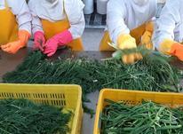 سبزی قورمه ، پیازداغ و سیرداغ در شیپور-عکس کوچک