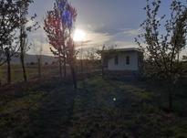 باغ انگور نو بار  در شیپور-عکس کوچک