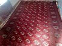 فرش دست بافت ترکمن در شیپور-عکس کوچک