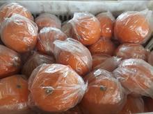 120 تن پرتقال تامسون در شیپور
