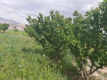 فروش باغ با 2ساعتو نیم آب قلعه حسین در شیپور