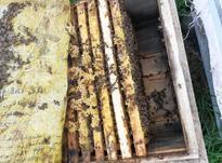 کندو زنبور عسل  در شیپور-عکس کوچک