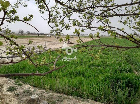 فروش زمین کشاورزی مخصوص باغ درجای بکروباصفا در گروه خرید و فروش املاک در اصفهان در شیپور-عکس3