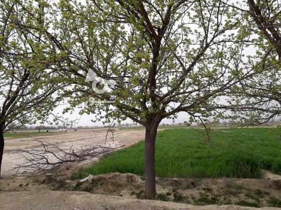 فروش زمین کشاورزی مخصوص باغ درجای بکروباصفا در گروه خرید و فروش املاک در اصفهان در شیپور-عکس1