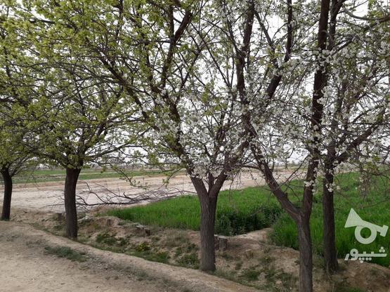 فروش زمین کشاورزی مخصوص باغ درجای بکروباصفا در گروه خرید و فروش املاک در اصفهان در شیپور-عکس2