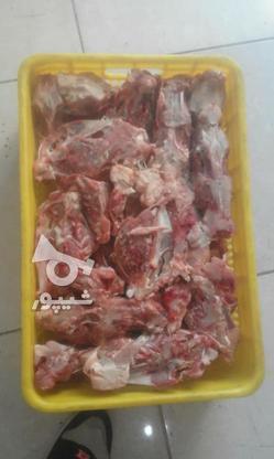 اسکلت مرغ گوشتی در گروه خرید و فروش خدمات و کسب و کار در تهران در شیپور-عکس2