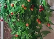 درختچه گیلاس و انگور و  سبد گل خارجی  در شیپور-عکس کوچک