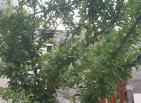 1000 متر باغ ویلا در شاهنامه در شیپور-عکس کوچک