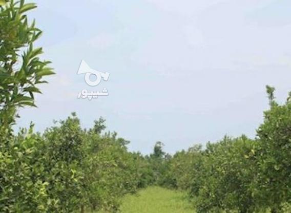 زمین تفکیکی تجاری در گروه خرید و فروش املاک در مازندران در شیپور-عکس1