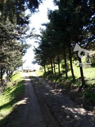 زمین مسکونی 250متری در گروه خرید و فروش املاک در مازندران در شیپور-عکس1