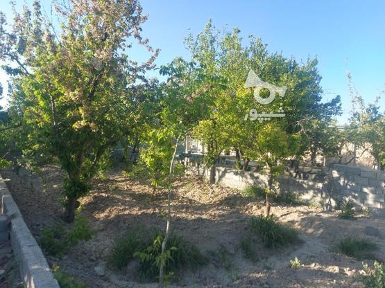 318 متر باغچه با درخت 30 ساله در ملارد+سهمیه آب کشاورزی  در گروه خرید و فروش املاک در تهران در شیپور-عکس2