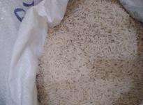 سر لاشه برنج طارم محلی فریدونکنار در شیپور-عکس کوچک