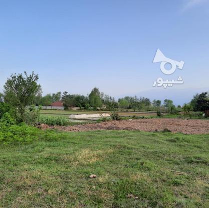 فروش زمین مسکونی 500 متر در صومعه سرا در گروه خرید و فروش املاک در گیلان در شیپور-عکس1