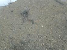 نیازمند شریک برای محدوده ماسه کوهی  در شیپور