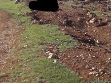زمین روانسر صالح آباد 200متر  در شیپور