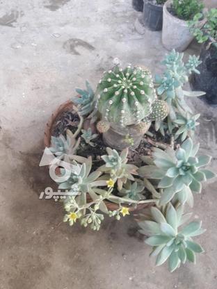 باغچه ی کاکتوس در گروه خرید و فروش لوازم خانگی در مازندران در شیپور-عکس2