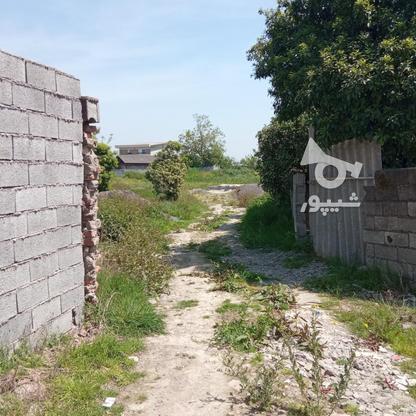 فروش زمین مسکونی 2000 متر در آمل در گروه خرید و فروش املاک در مازندران در شیپور-عکس11