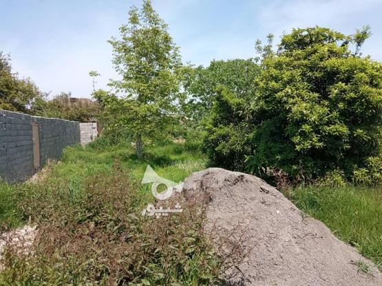 فروش زمین مسکونی 2000 متر در آمل در گروه خرید و فروش املاک در مازندران در شیپور-عکس7