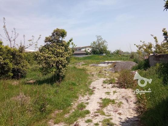 فروش زمین مسکونی 2000 متر در آمل در گروه خرید و فروش املاک در مازندران در شیپور-عکس10