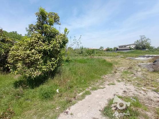 فروش زمین مسکونی 2000 متر در آمل در گروه خرید و فروش املاک در مازندران در شیپور-عکس5