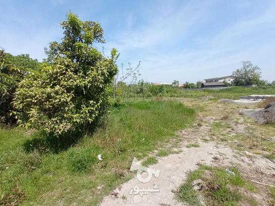 فروش زمین مسکونی 2000 متر در آمل در گروه خرید و فروش املاک در مازندران در شیپور-عکس4