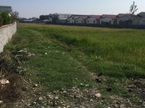 فروش زمین مسکونی 1000 متر در محمودآباد در شیپور