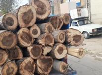 خرید انواع چوب  در شیپور-عکس کوچک