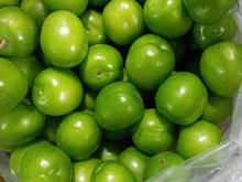 کوجه سبز کیلو  در شیپور