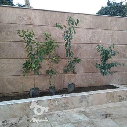 فروش ویلا 110 متر در بابلسر در گروه خرید و فروش املاک در مازندران در شیپور-عکس3