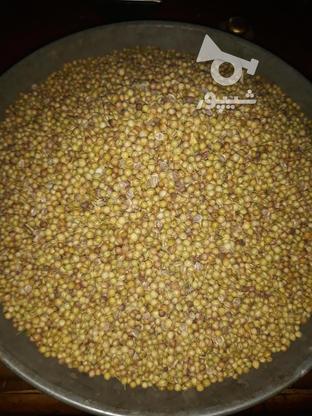 تولیدوپخش تخم گشنیز در گروه خرید و فروش خدمات و کسب و کار در تهران در شیپور-عکس3