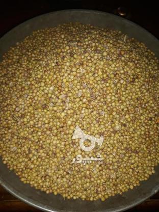 تولیدوپخش تخم گشنیز در گروه خرید و فروش خدمات و کسب و کار در تهران در شیپور-عکس1