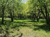 باغ در روستای کوهانی در شیپور-عکس کوچک