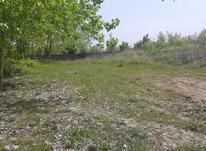 فروش زمین باغی  1250 متر در آمل در شیپور-عکس کوچک
