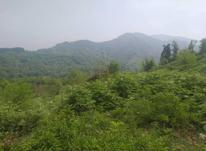 زمین مسکونی 10000 متر در لاهیجان در شیپور-عکس کوچک