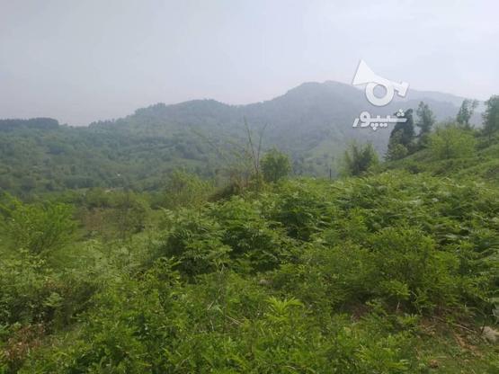 زمین مسکونی 10000 متر در لاهیجان در گروه خرید و فروش املاک در گیلان در شیپور-عکس1