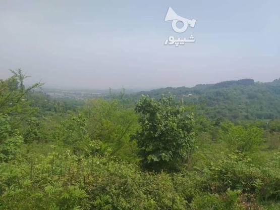 زمین مسکونی 10000 متر در لاهیجان در گروه خرید و فروش املاک در گیلان در شیپور-عکس10
