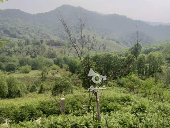 زمین مسکونی 10000 متر در لاهیجان در گروه خرید و فروش املاک در گیلان در شیپور-عکس3