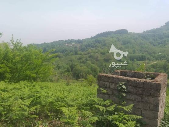 زمین مسکونی 10000 متر در لاهیجان در گروه خرید و فروش املاک در گیلان در شیپور-عکس2