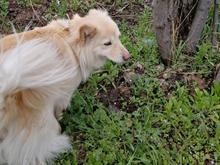 سگ گمشده در حوالی عبدالقادر در شیپور