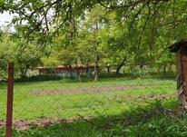 فروش زمین ییلاقی مسکونی 300 متر در رضوانشهر در شیپور-عکس کوچک