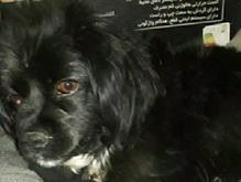 سگ دزدیده شده یادگارامام در شیپور