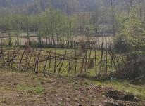1000 متر زمین مسکونی بین لاهیجان و سیاهکل در شیپور-عکس کوچک