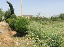فروش زمین مسکونی شهرکی در آمل در شیپور-عکس کوچک